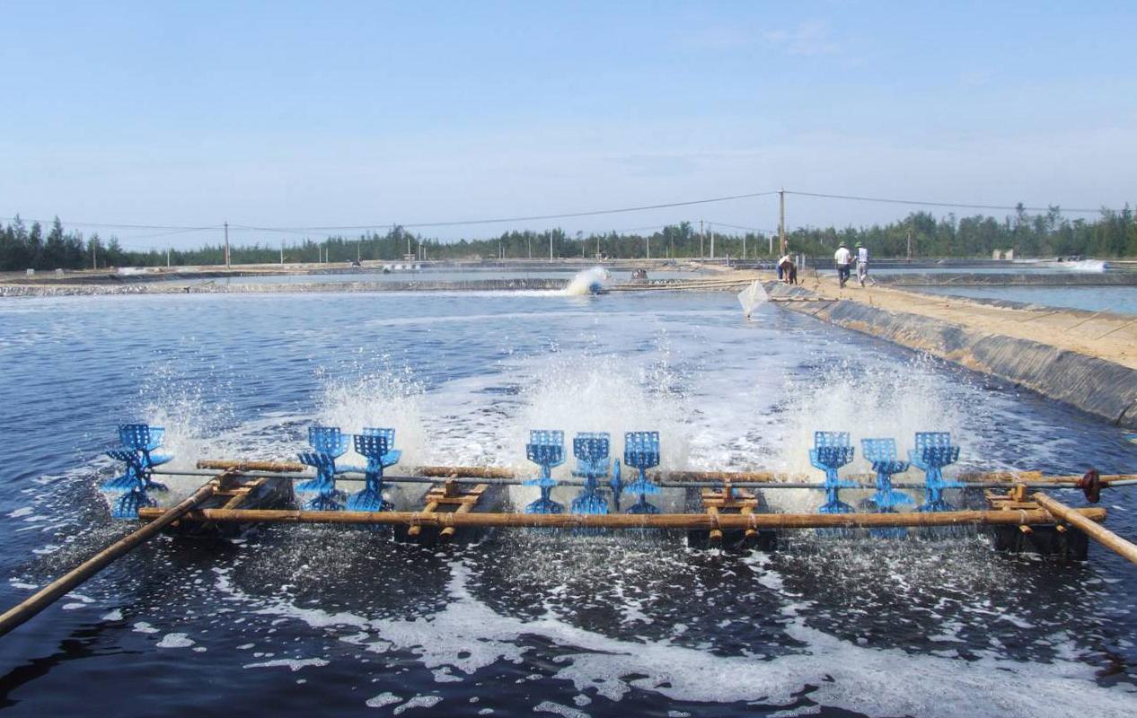 Máy oxy trong nuôi trồng thủy sản