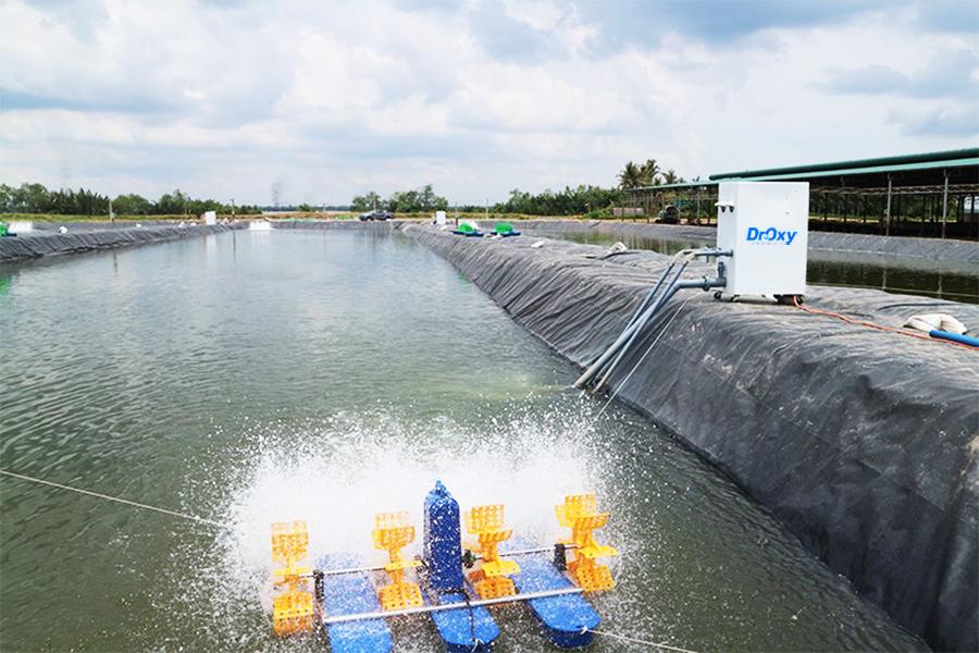 sử dụng máy tạo oxy trong nuôi tròng thủy sản